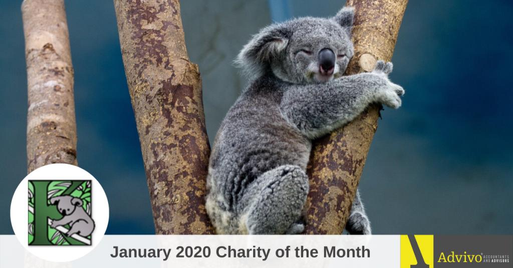 A Koala Clinging on a Branch