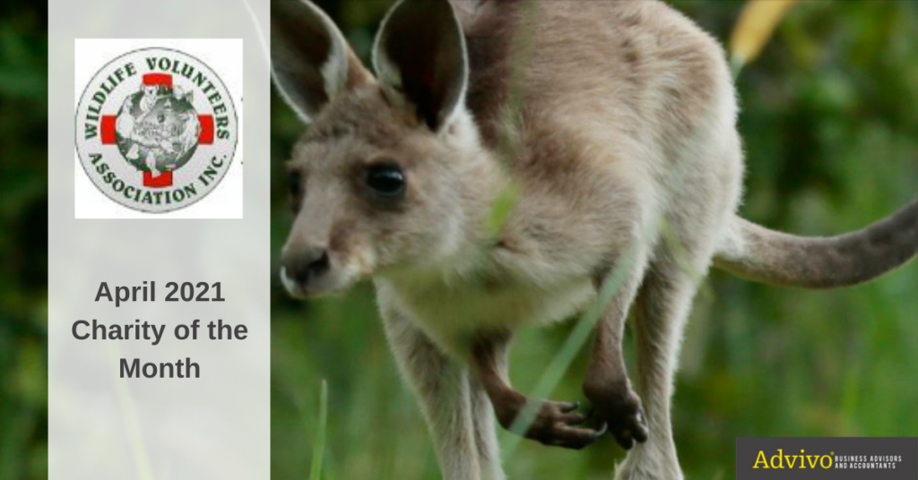Kangaroo leaping in a grass - April 2021 Charity of the Month Image